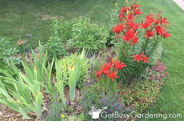 Streusalztolerante Pflanzen in meinem Garten