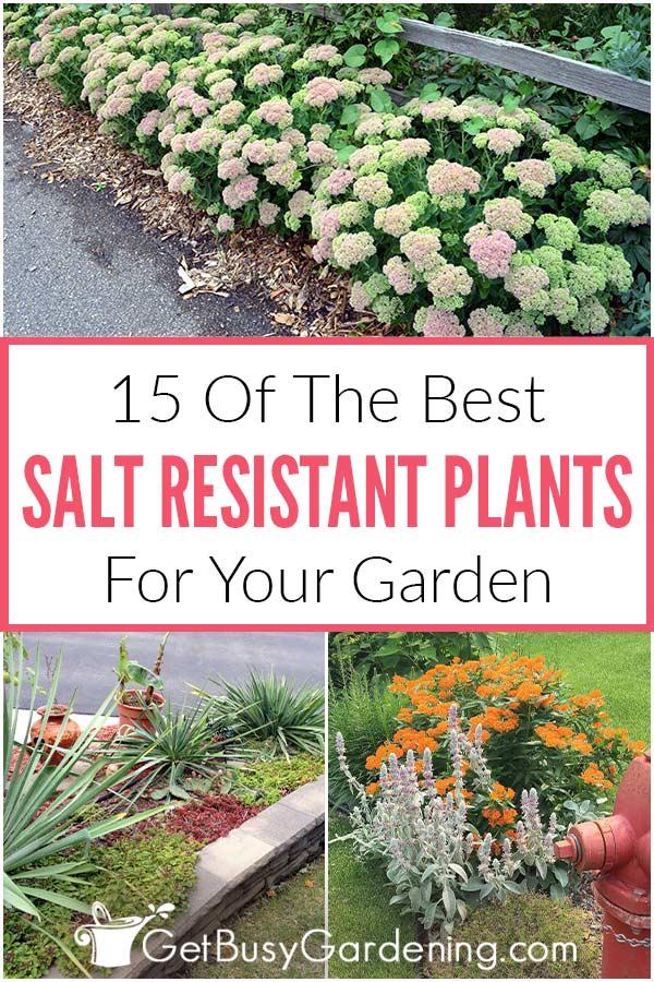 15 der besten salzbeständigen Pflanzen für Ihren Garten