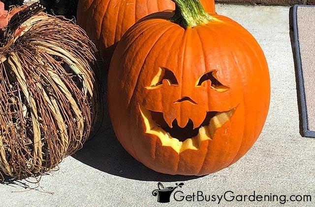 Carved pumpkin sitting in full sun