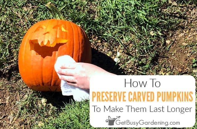 Preserving Carved Pumpkins - Plus 7 Tips To Make Them Last Longer