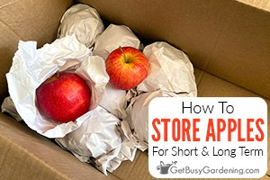 How To Store Apples For The Short & Long Term
